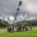 Kirwabaum-Aufstellen