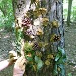 Werkeln mit Ton im Wald