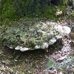 Waldtage im Kindergartn
