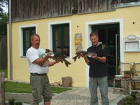 Angeln - Reicher Fischfang in Bayern
