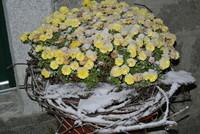 Winterzauber am Müllner-Hof
